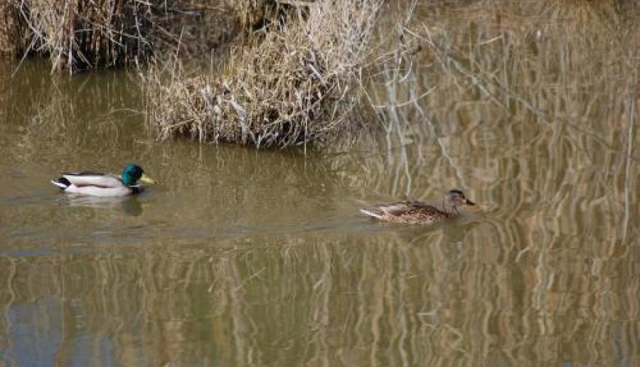 Laguna di venezia (foto di Mario Fletzer)