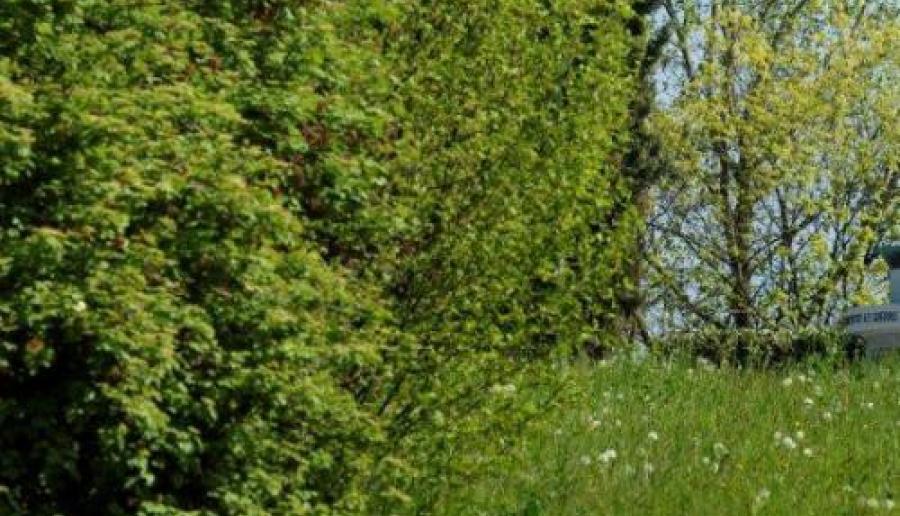 alberi a Musile di Piave